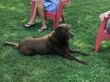 Marty an island dog
