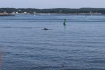 Green #9 Whale
